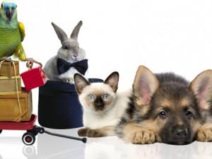 Зоомагазин «Dogis» – рай для ваших питомцев!