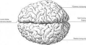 Миф о полушариях головного мозга