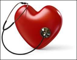 Функции и строение сердца человека