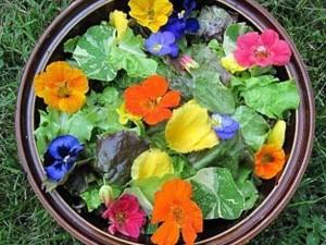 Съедобные цветы защищают от рака и инфаркта