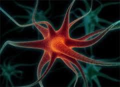 Стволовые клетки устраняют последствия инсульта