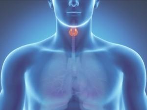 Щитовидная железа как аккумулятор йода в организме