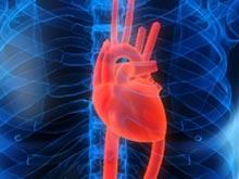 Здоровье сердца и когнитивные способности напрямую связаны