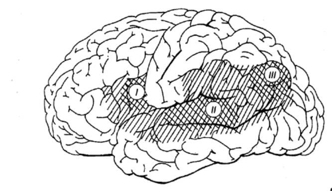 Локализация эмоциогенных зон в мозге