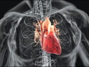 Здоровье сердца и сосудов, а также мощный антиоксидант