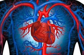 Врачи научились за две недели предсказывать инфаркт