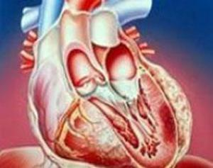 Робость ? фактор риска сердечного приступа