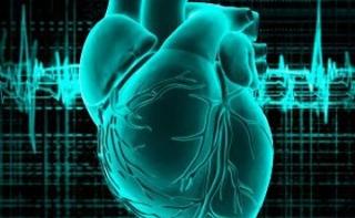 Израильские ученые научились омолаживать сердечный мускул