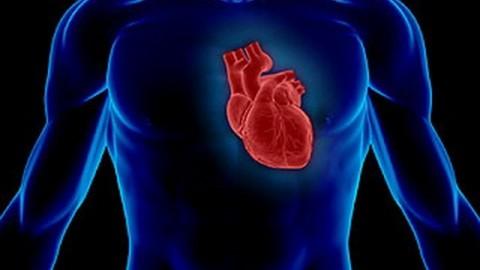 Сердце самовосстанавливается даже после тяжелых эмоциональных потрясений