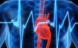 Найдены гены, регулирующие частоту сердцебиений