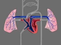 Сердечно-сосудистые неврозы