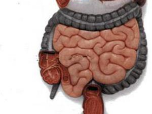 Микрофлора кишечника напрямую связана со здоровьем сосудов