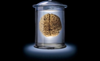 Размер мозга влияет на анорексию
