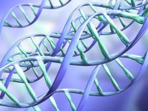 Ученые создали продвинутые копии иммунных частиц