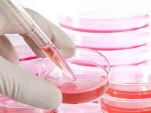 Стволовые клетки: перспективы использования