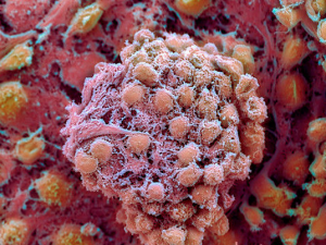 Стволовые клетки в наши дни