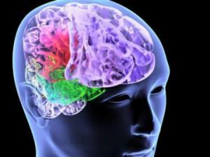 Обнаружены клетки, восстанавливающие мозг после инсульта