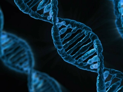 Защитить ДНК поможет вино