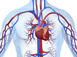 Какие заболевания сердца вообще существуют?