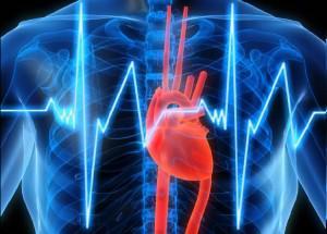 Ягоды могут защитить вас от инфаркта