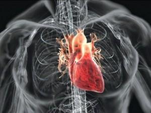 Вся необходимая информация о сердце и его работе, портал «Наше-Сердце.ру»