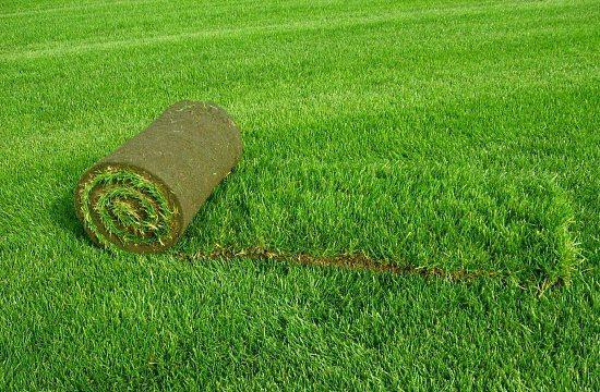 Какой газон выбрать для дома или дачи?