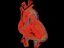 Исследователи научили сердце восстанавливаться вопреки законам природы