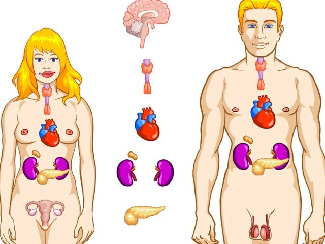 Мужские и женские гормоны и их роль в омоложении организма