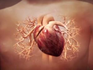 Учёные создали уникальный биологический кардиостимулятор