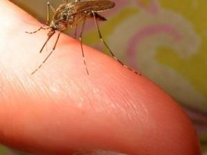Укусы насекомых: первая помощь