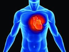 Крепкие сосуды – крепкое здоровье! Как помочь капиллярам, венам и артериям?