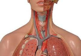 Атеросклероз — причины и последствия