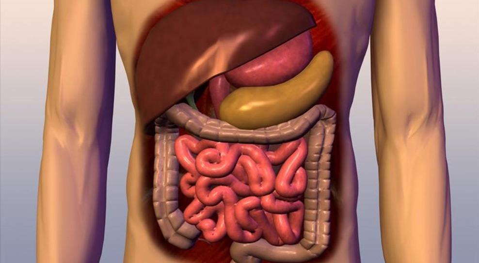 Как облегчить работу пищеварительной системы?