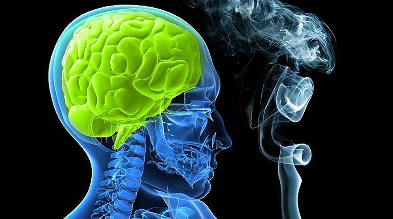 Ученые: курение истончает кору головного мозга
