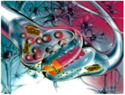 Новые механизмы проводящих путей, контролирующие головной мозг и сердце