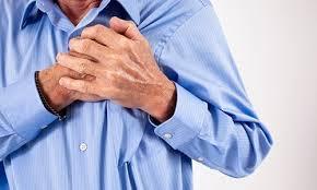 Морфология левых камер сердца при патологиях сердечно-сосудистой системы