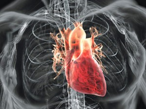 Ученые выяснили: зимние месяцы опасны для сердца