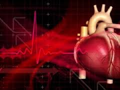 Исследователи утверждают, что кислород уменьшает регенеративные свойства сердца