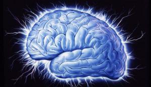 Обнаружено как мозг контролирует голод
