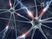 Клетки головного мозга не могут восстанавливать ДНК