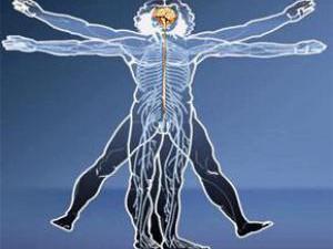Хорошая гибкость тела помогает в работе сердца и артерий