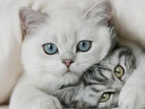 Кошки помогут при ишемическом инсульте