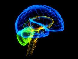 Мозги людей совпадают на 95%