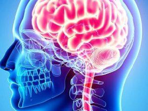 Мозг способен восстановиться после инсульта самостоятельно