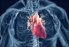 Сколько времени требуется на полное восстановление после сердечного приступа?