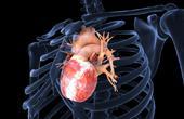 Что такое увеличенное сердце?