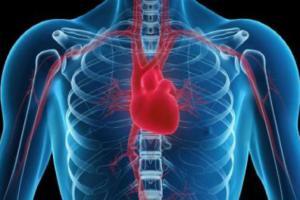 Ученые выяснили, как стареют сердца женщин и мужчин