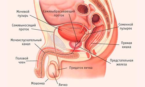 Стимуляция простаты для повышения потенции и профилактики заболеваний предстательной железы