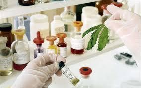 Лекарство из марихуаны позволит остановить эпилепсию