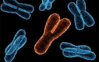 Потеря Y-хромосомы увеличивает риск болезни Альцгеймера